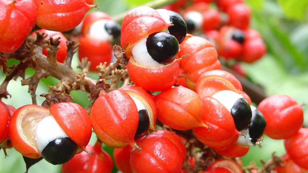 guarana as an aphrodisiac